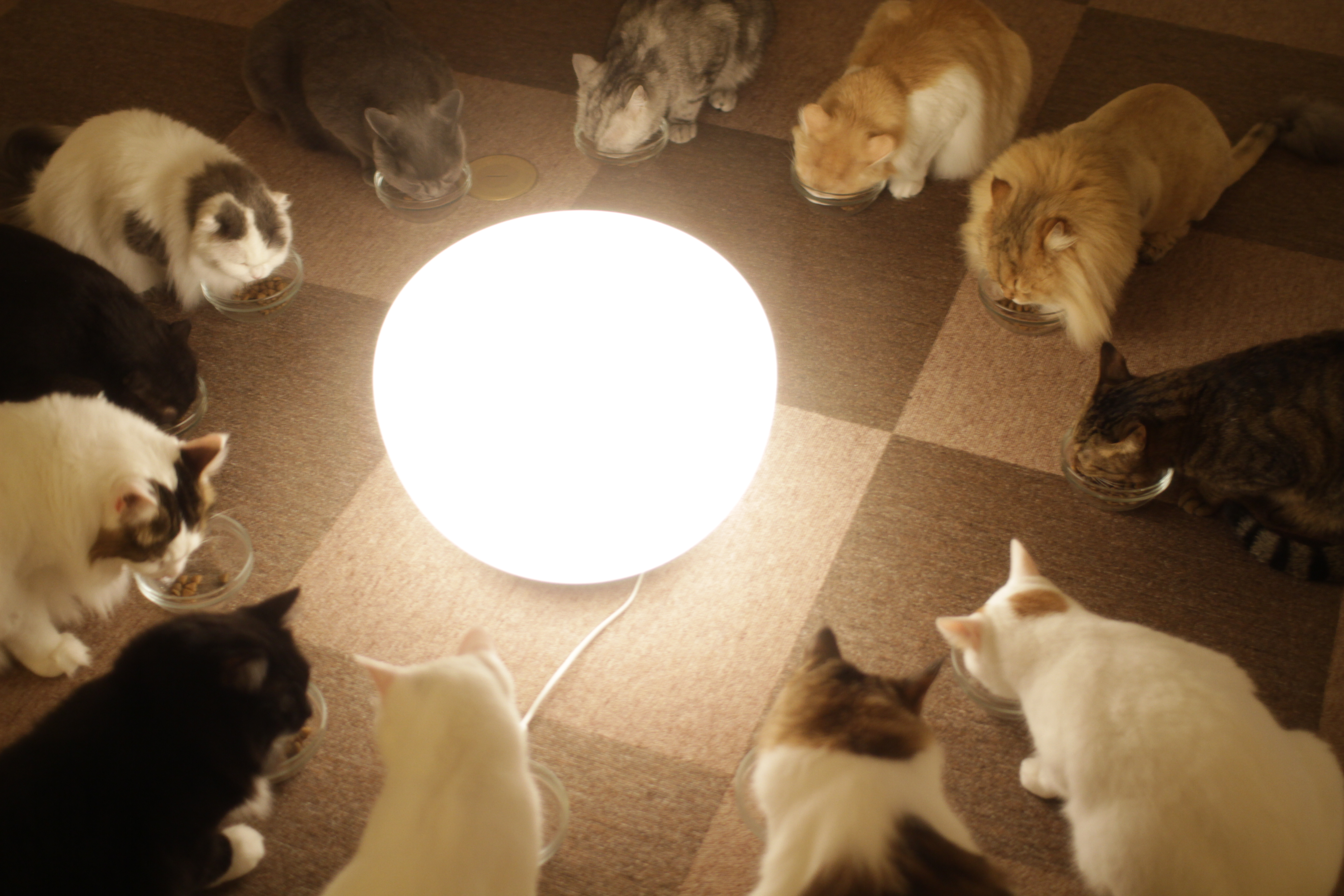 Cats_in_cat_cafe